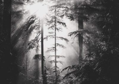 Mount Baker Morning